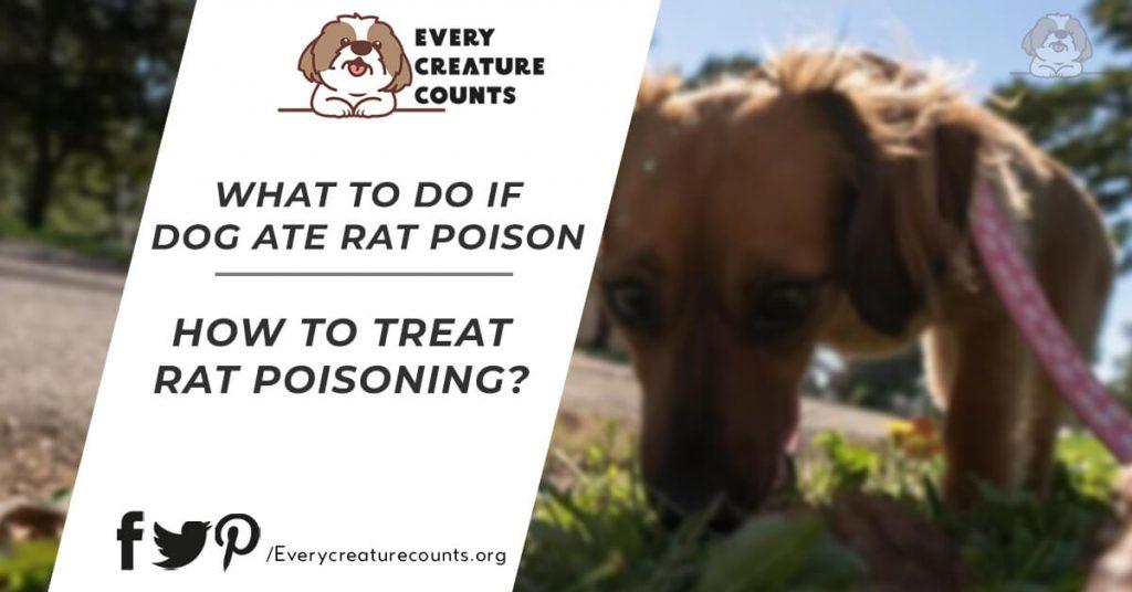 My Dog ate rat Poison