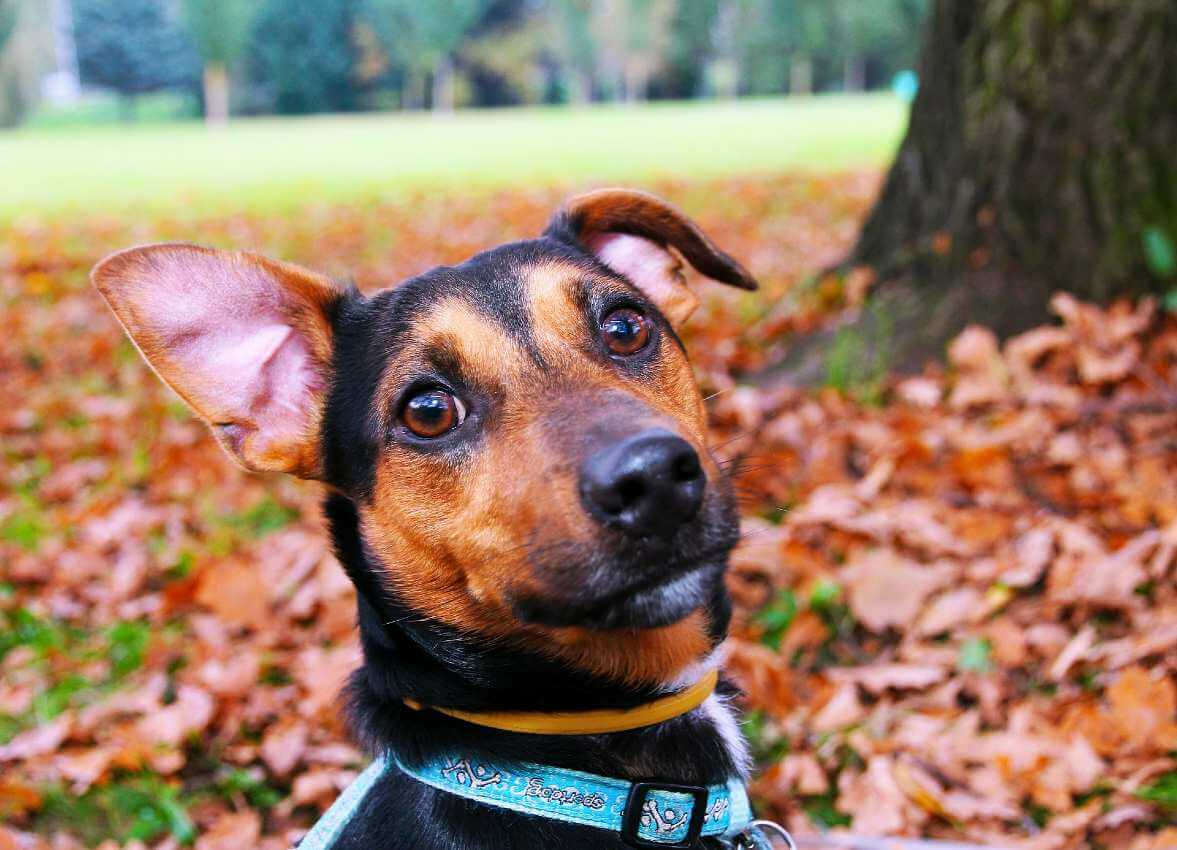 Responsible Pet Ownership 101: Spaying & Neutering Your ...