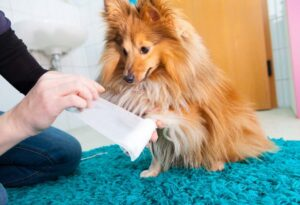 How to Care for your Dog's Minor Wounds at Home