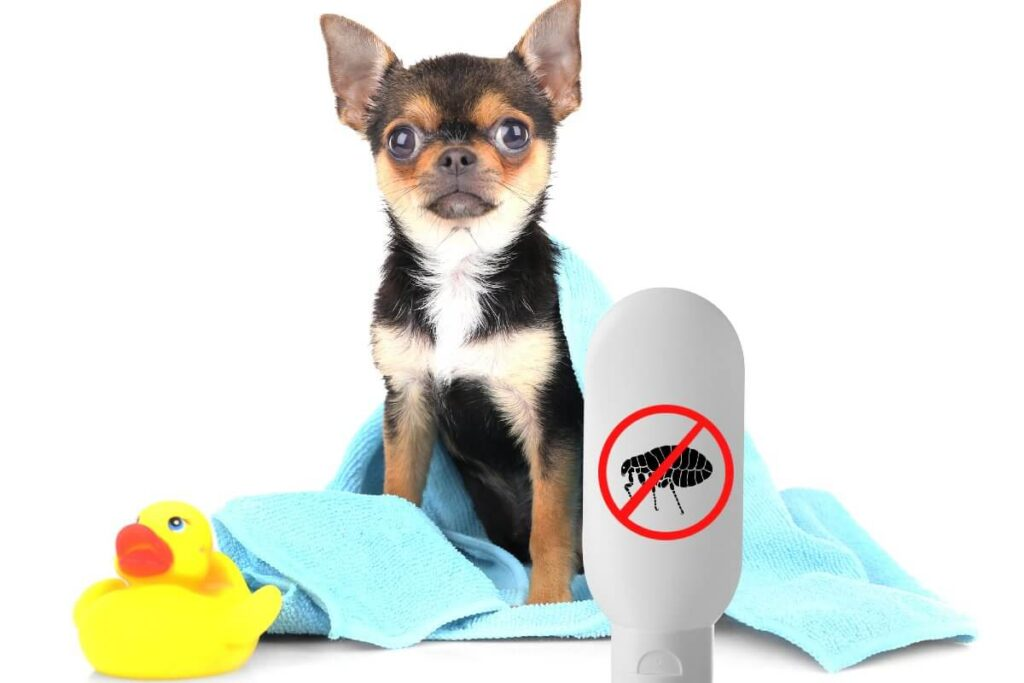 Most Reliable Flea and Tick Preventatives for Dogs