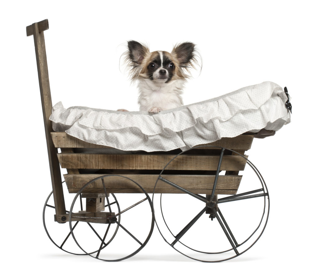 stroller for senior dogs