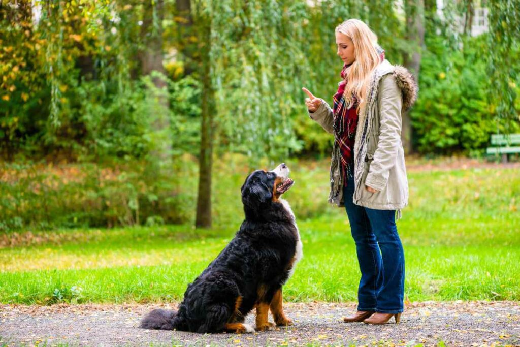 10 Basic Commands Every Dog Should Know