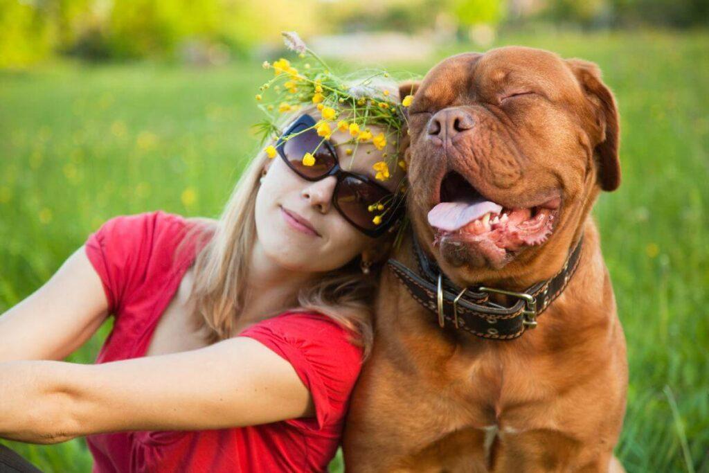10 Giant Dog Breeds