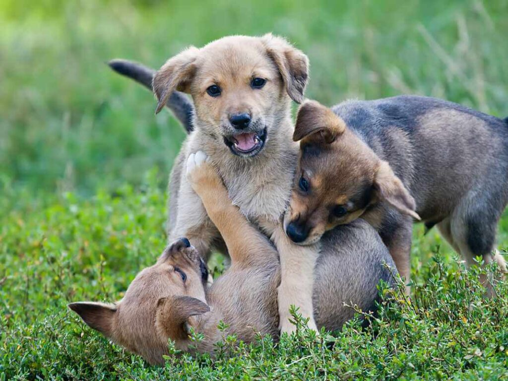 How Rambunctious Are Male Puppies