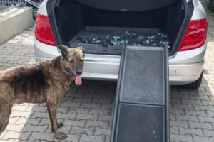 How a Dog Ramp Can Optimize Your Dog's Mobility