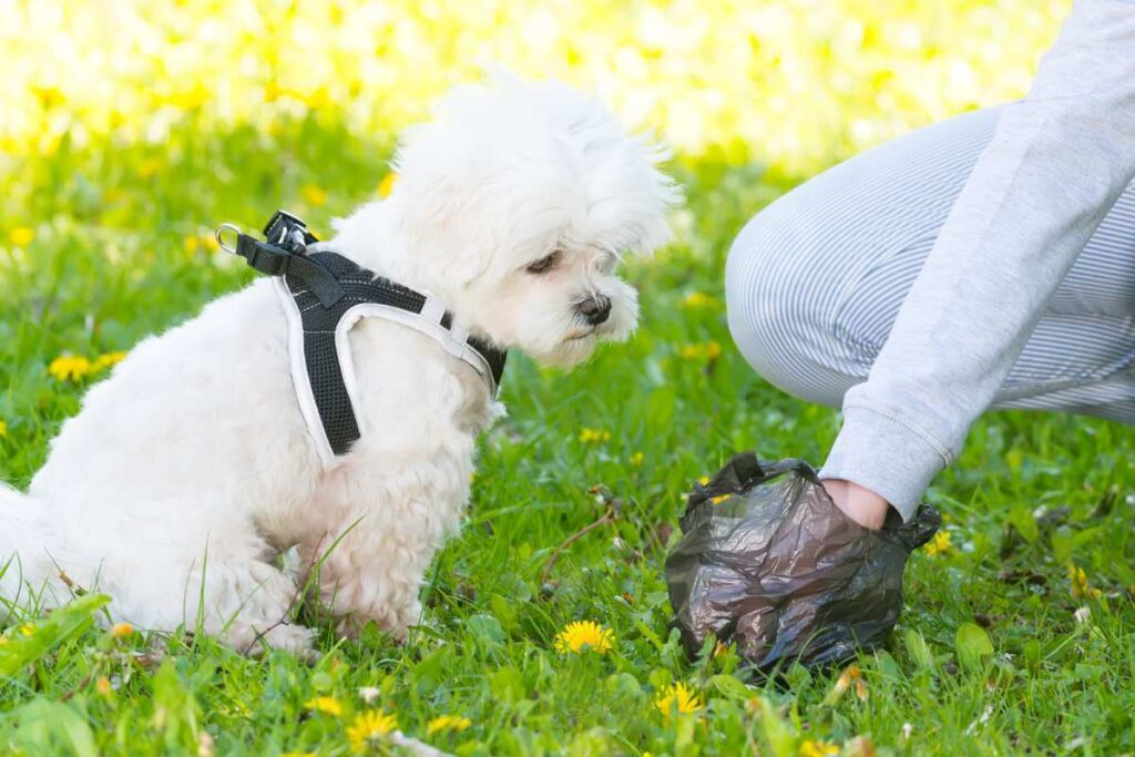How to Keep Your Pup From Eating Poop