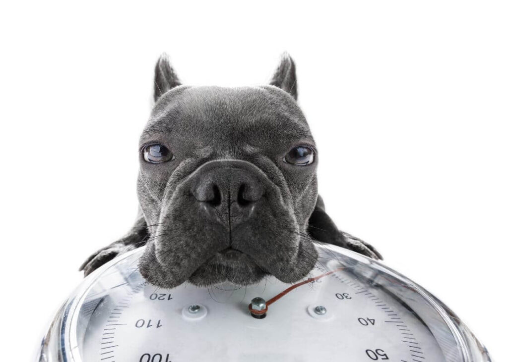 How to Put Your Dog on a Weightloss Diet