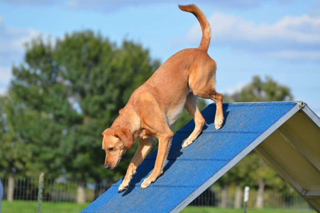 Outdoor Dog Ramp