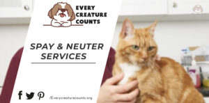 Spay Cats and Neuter Services in Colarado (2)
