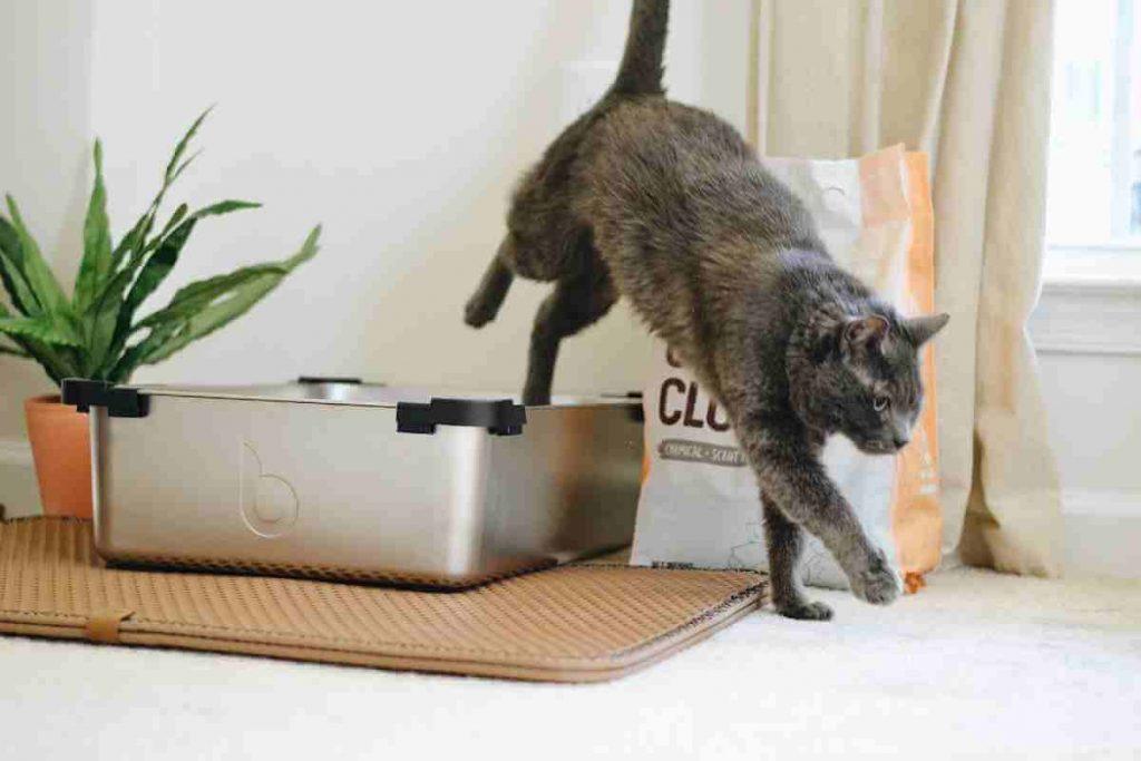 Cat walking away the litter box