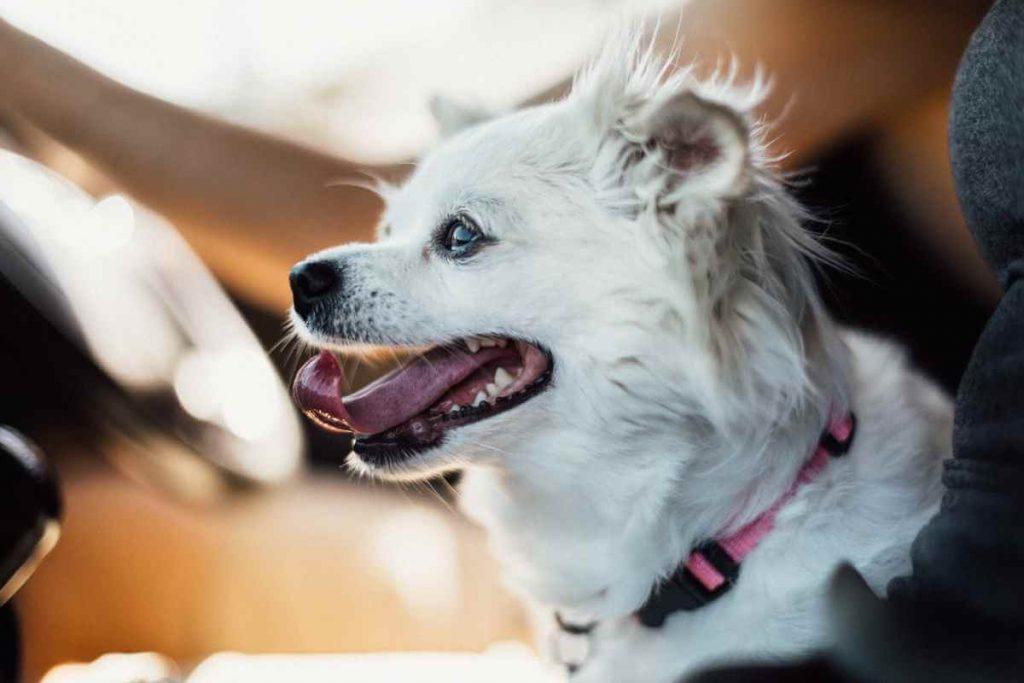 best dog car harness